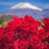 roses-rfg-930x1080-c